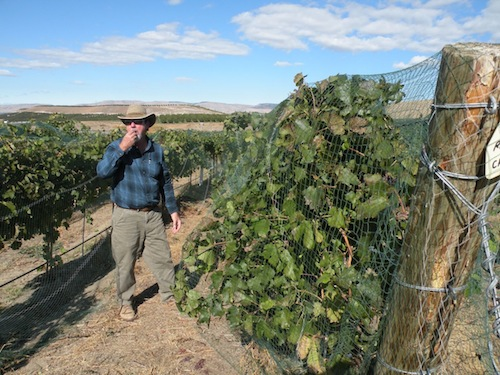 Joe Hattrup grows Tempranillo in Washington's Rattlesnake Hills.