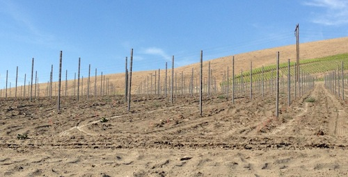 Duckhorn owns Canvasback, a new Washington winery using Red Mountain grapes.