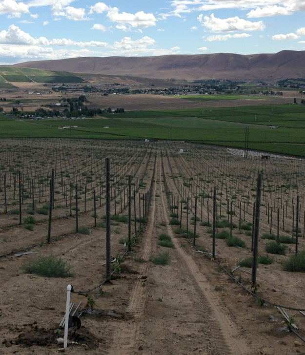 Ste. Michelle helps Duckhorn plant Red Mountain vineyard