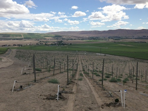 Duckhorn Wine Co. owns Longwinds Vineyard high on Red Mountain.