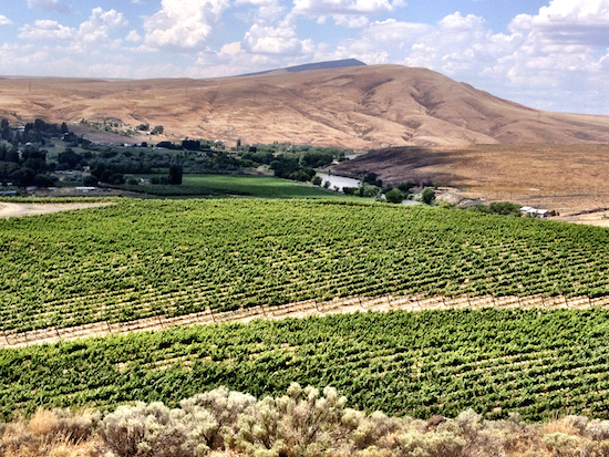Shaw Vineyards, a 99-acre site east of the Yakima River from Benton City, is dominated by Cabernet Sauvignon (90 acres), with 8 acres of Merlot and 1 acre of Petit Verdot.