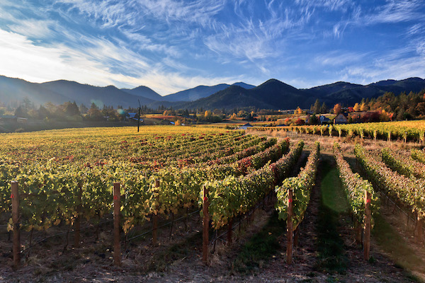 Varner-Traul Vineyard in Talent, Ore., is the estate vineyard for Ledger David Cellars. The Rogue Valley site, first planted in 2006, spans 15 acres and includes white varieties Chardonnay, Chenin Blanc, Malvasia Bianca, Sauvignon Blanc and Viognier as well as Cabernet Franc, Malbec, Petit Verdot, Sangiovese, Syrah and Tempranillo.
