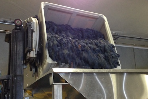 Marquette grapes are crushed in Washington wine country.