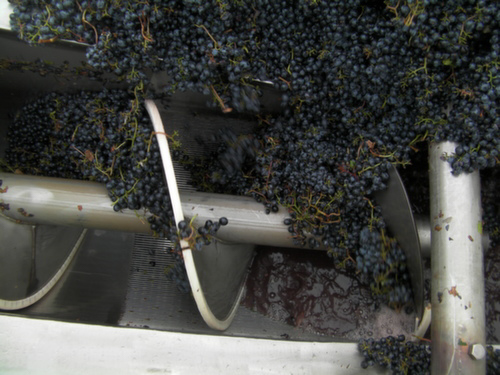 Malbec from Spice Cabinet Vineyard begins its transformation into wine Oct. 1, 2013 at Mercer Estates in Prosser, Wash.