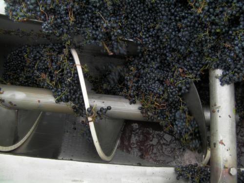 Malbec from Spice Cabinet Vineyard begins its transformation into wine Oct. 1, 2013 at Mercer Estates in Prosser, Wash.