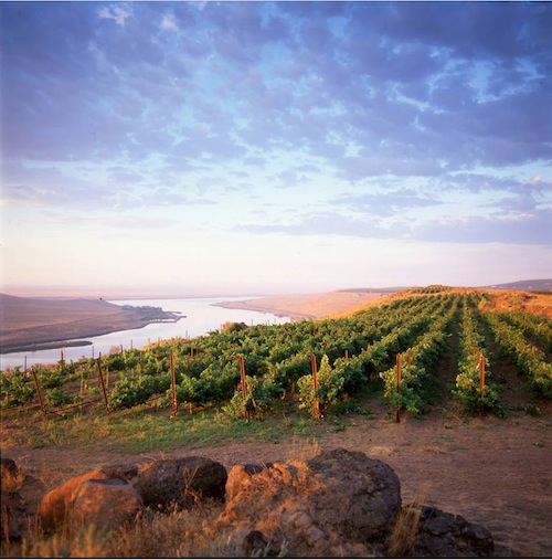 Destiny Ridge Vineyard is the estate vineyard for Alexandria Nicole Cellars.