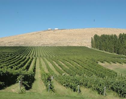 Bill Powers planted Badger Mountain Vineyard in Kennewick, Washington.