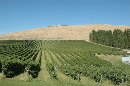 Bill Powers planted Badger Mountain Vineyard in Kennewick, Washington.