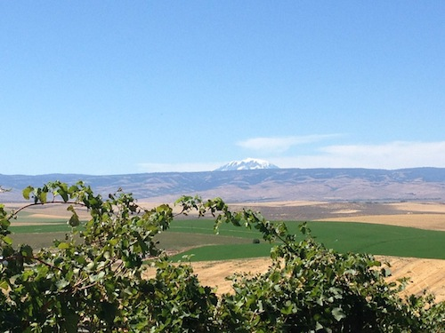 Mount Adams is visible from Red Willow Vineyard.