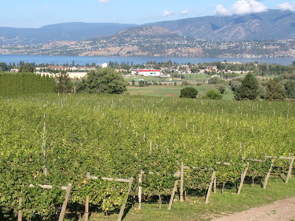 Tantalus Vineyards in Kelowna, British Columbia, first was planted to table grapes in 1927 and is recognized as the oldest continuously producing site in the province.
