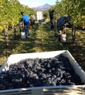 cabernet sauvignon harvest rogue valley feature 120x134 - Cab is king in Washington, across Northwest