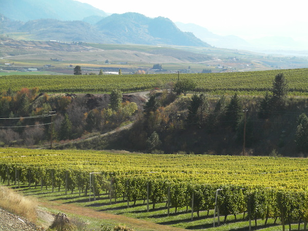 The tasting room at Gehringer Brothers Estate Winery in Oliver, British Columbia, offers a remarkable view of Canada's acclaimed Golden Mile.