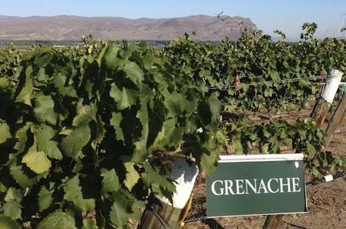 Rhône grape varieties are one of the most exciting categories in the Pacific Northwest.