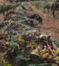 harrison hill feature 120x134 - History, mystery in Harrison Hill Vineyard