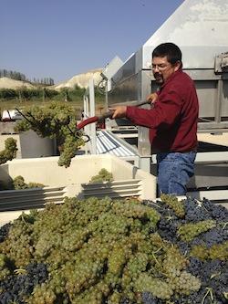 Martin Fujishin intermingles Viognier and Syrah in Idaho wine country.