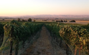 Williamson Vineyard is in the heart of Idaho wine country.