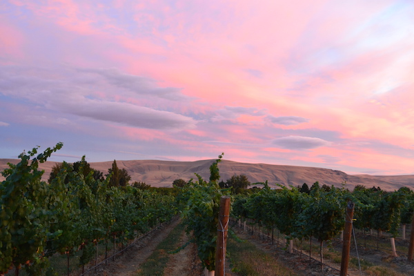 Canyon Vineyard Ranch is an estate vineyard in the Yakima Valley near Prosser, Wash., for Seattle-based Precept Wine.