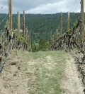 kettle valley vines 120x134 - Kettle Valley Winery proves reds can work in British Columbia