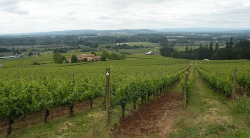 Stoller Family Estates vineyard in Oregon's Dundee Hills.