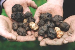 Full hands are a heavenly sight during the Oregon Truffle Festival, which was established in 2006.
