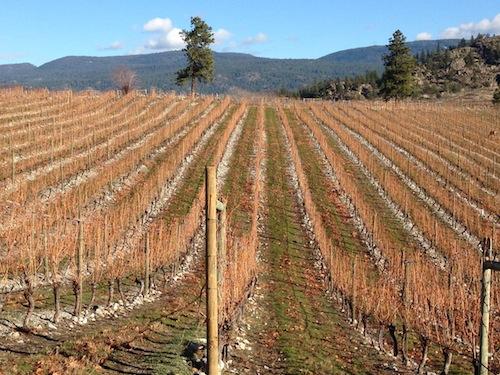 Stoney Slope Vineyard is part of Wild Goose Vineyards in Okanagan Falls, British Columbia.