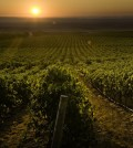grape growers feature 120x134 - Washington grape growers honor their own