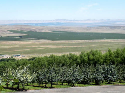 Wautoma Springs Vineyard is near Cold Creek Vineyard in Washington state wine country.