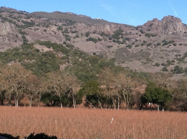 Two groups in the Napa Valley of California have posted comments rejecting the proposed rulemaking by the TTB that would permit vintners in Oregon to reference wines made with Napa Valley fruit on their label.