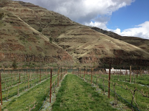 Rock 'n' J Vineyard would be in the Lewis-Clark Valley AVA.