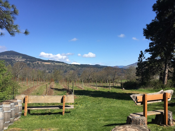 Grape vines amid the pines begin to awaken this spring at Cathedral Ridge Winery in Hood River, Ore.
