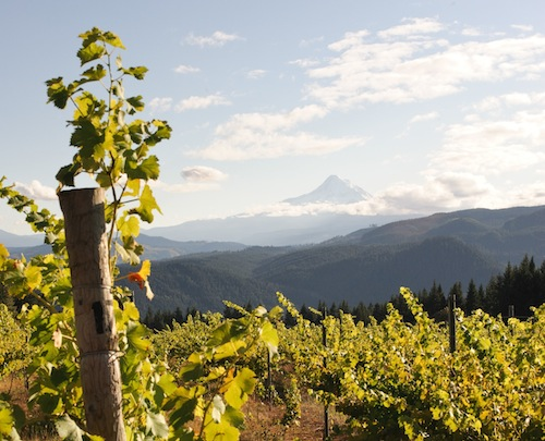Mount Hood in the Columbia Gorge.