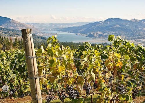 The Columbia Gorge is home to more than 30 wineries.