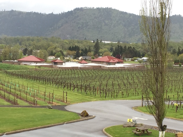 Fault Line Vineyards in Roseburg, Ore., is the estate planting for Abacela and includes a block adjacent to Lookingglass Elementary School.