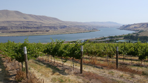 Moody Vineyard, east of The Dalles, Ore., on the mouth of the Deschutes River, provides Cathedral Ridge Winery with Cabernet Franc, Syrah and Zinfandel.