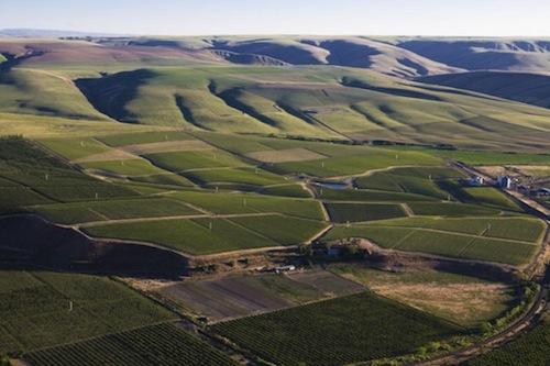 Seven Hills Vineyard and SeVein
