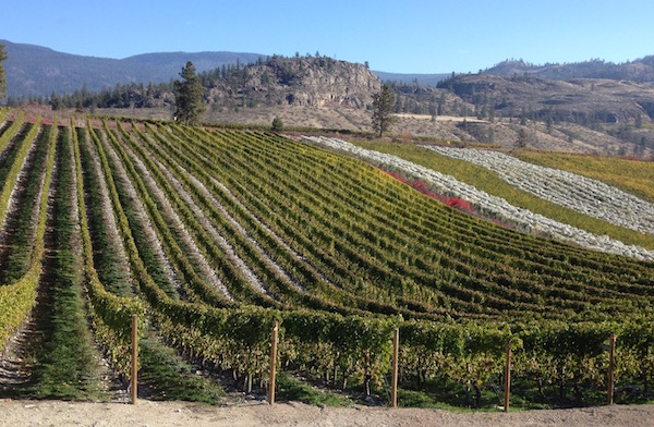 Stoney Slope Vineyard, in this photo taken Oct. 17, 2013, produced the best Riesling at the 2015 British Columbia Best of Varietal Wine Competition for its 2013 Stoney Slope Vineyard Riesling.