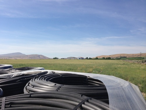 Drip irrigation tubes for Aquilini vineyards on Red Mountain.