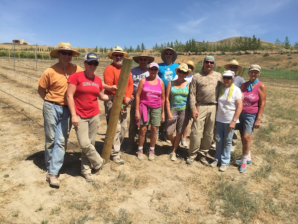 A party of a dozen helped plant Gifford Vineyard on Saturday, June 6, 2015 in Benton City, Wash.