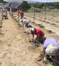 gifford vineyard planting feature 120x134 - Family, friends help plant Grenache on shoulder of Red Mountain