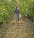wade wolfe vineyard feature 120x134 - 3 decades later, Columbia Valley still defines Washington wine