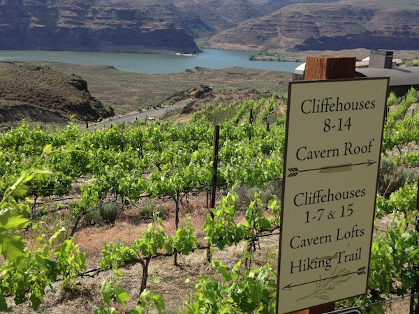 The Bryan family purchased land overlooking the spectacular Columbia River in Central Washington and planted vineyards beginning in 1980.