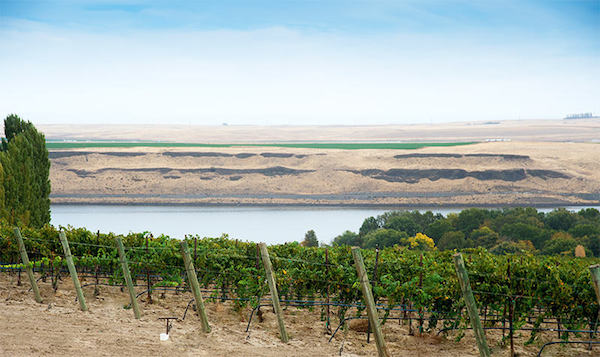 Gordon Estate Vineyard near the Snake River produced the 2013 Syrah,, chosen as the best U.S. Syrah at the 2015 Decanter World Wine Awards in London.