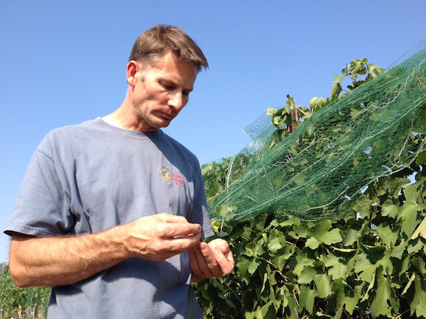 Cabernet Sauvignon from Fraser Vineyard will cost Greg Koenig as much as $1,750 per ton — making it the most expensive fruit in Idaho.