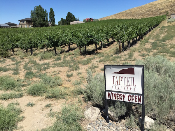 Larry Pearson established Tapteil Vineyard on Red Mountain soon after he camped on the property overlooking the Yakima River and Benton City, Wash.