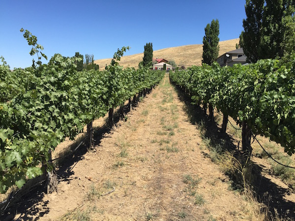 Larry Pearson began planting Tapteil Vineyard in 1985 and for many years he relied on family, friends and Scott Williams of Kiona Vineyards Winery to help him tend the vines.