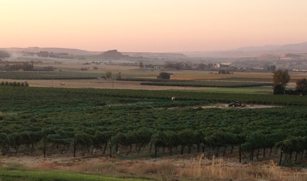 Williamson Vineyard in Idaho's Sunnyslope Wine District is a primary source for Koenig Vineyard wines.