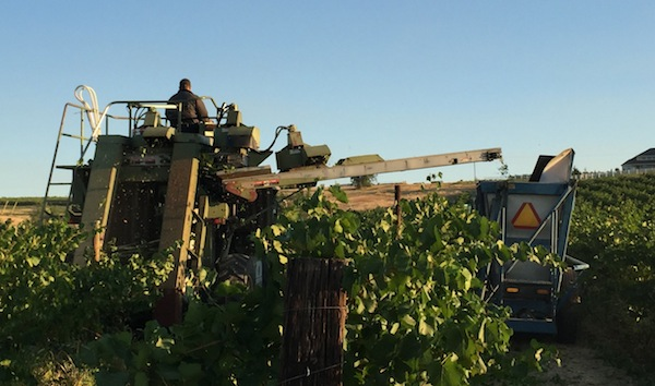 Early harvest in the Yakima Valley