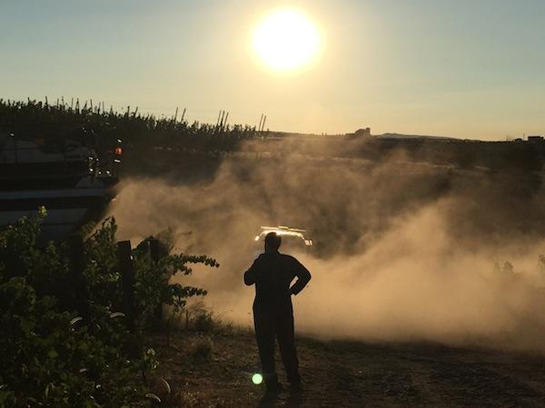 august harvest 04 - Northwest vineyards track along 2017 vintage after cool July