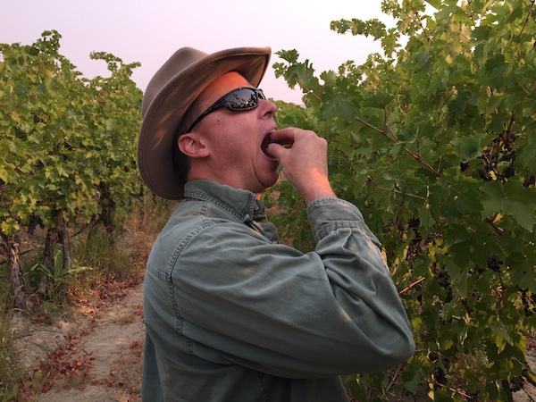 Charlie Auclair checks Cabernet Franc grapes in Artz Vineyard on Red Mountain.