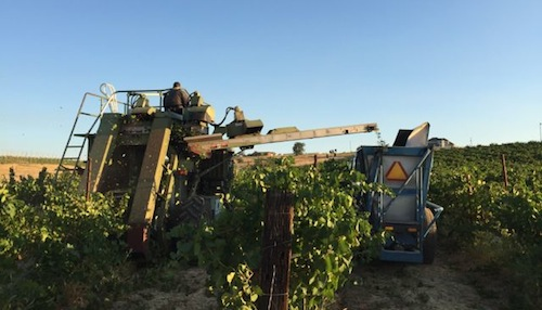 Wine grape harvest has begun in Washington wine country.